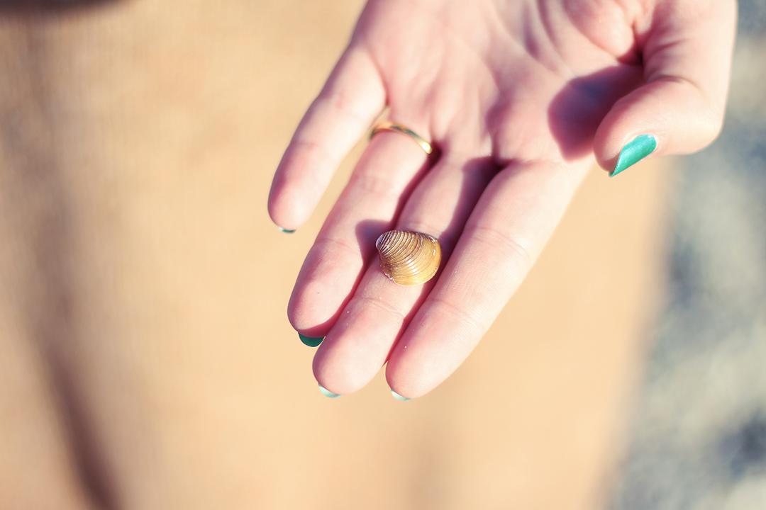 Am Gardasee Muschel auf der Hand