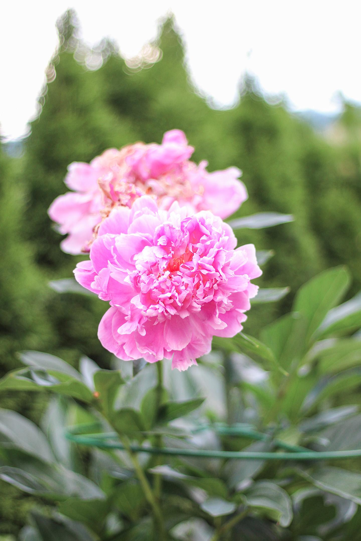 Mamas Garten